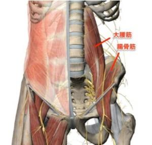 坐骨神経痛の症状の原因、大腰筋のケイレンの説明画像