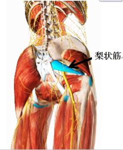 梨状筋の説明画像