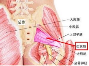 坐骨神経 お尻の筋肉